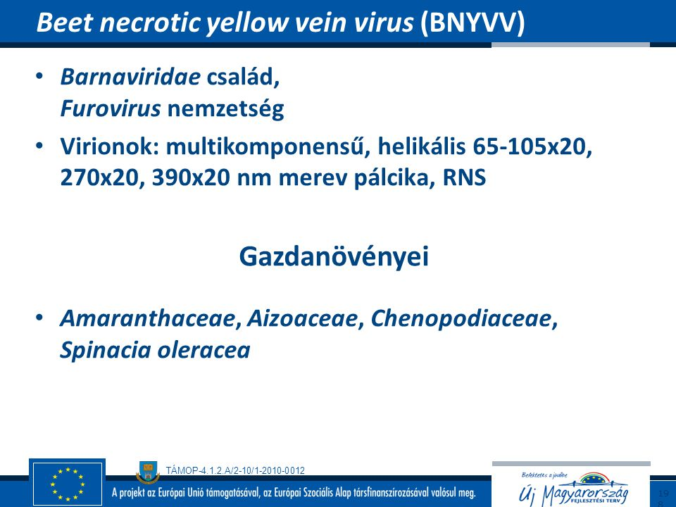 Beet necrotic yellow vein virus (BNYVV)