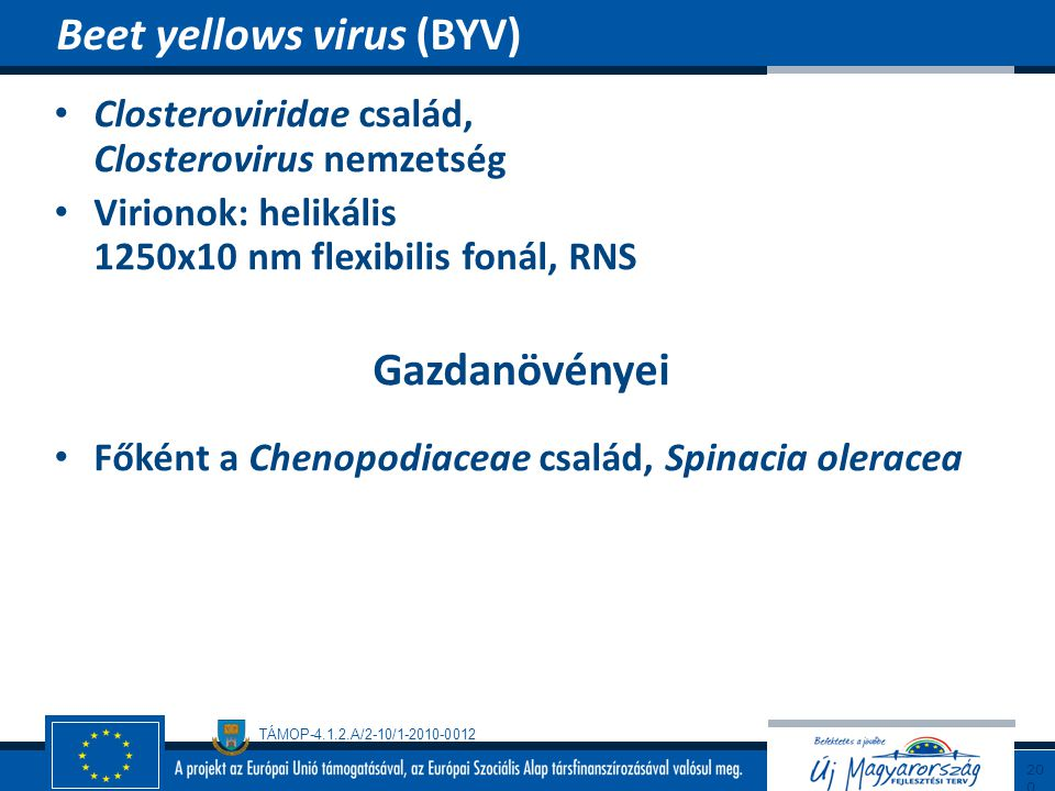 Beet yellows virus (BYV)