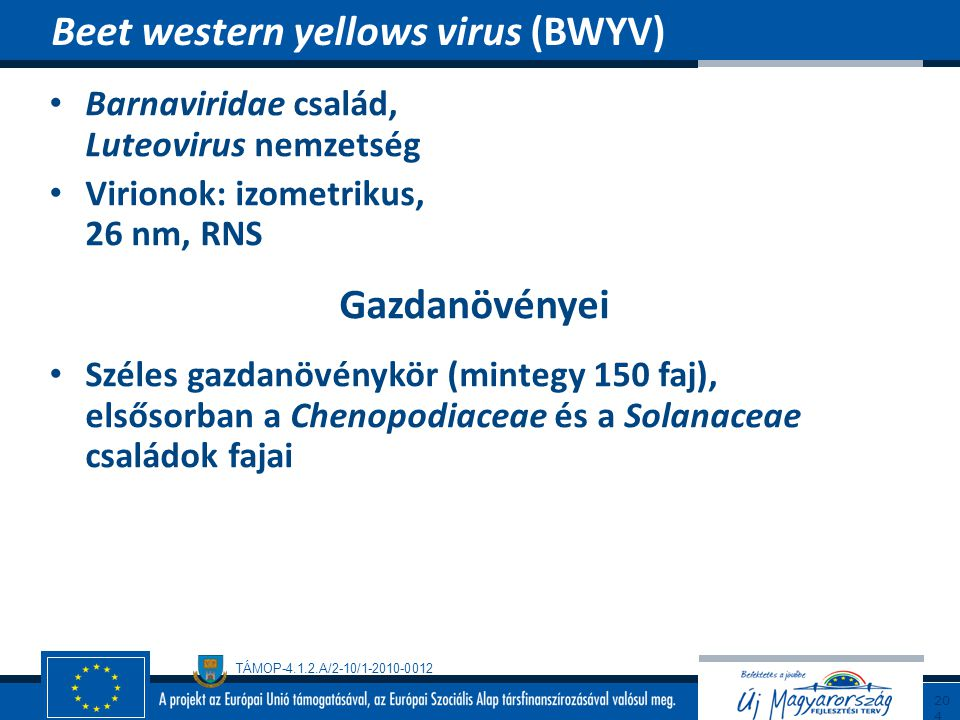 Beet western yellows virus (BWYV)