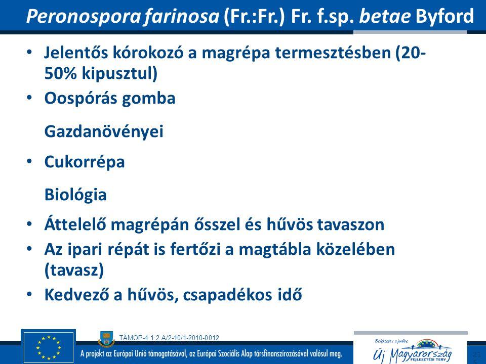 Peronospora farinosa (Fr.:Fr.) Fr. f.sp. betae Byford