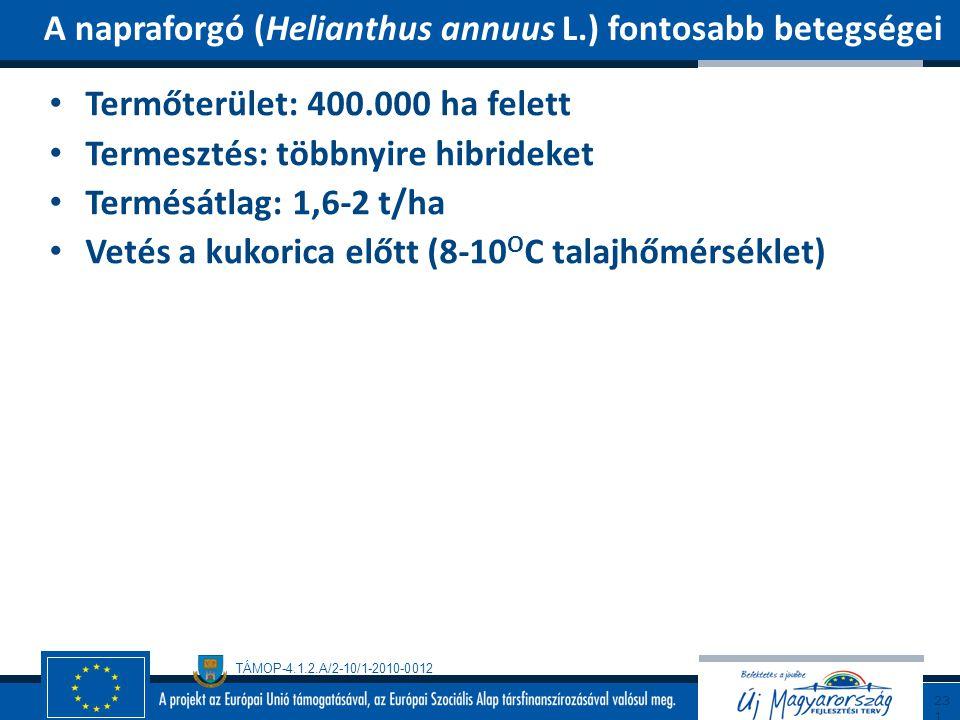 A napraforgó (Helianthus annuus L.) fontosabb betegségei