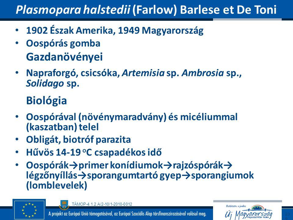 Plasmopara halstedii (Farlow) Barlese et De Toni