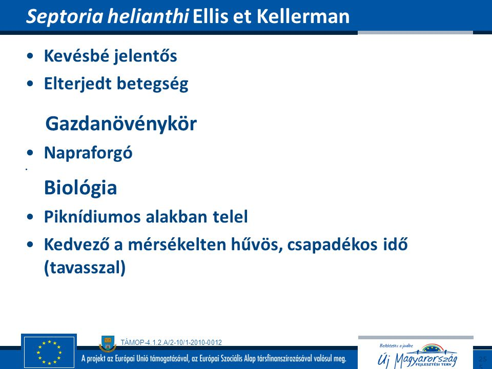 Septoria helianthi Ellis et Kellerman