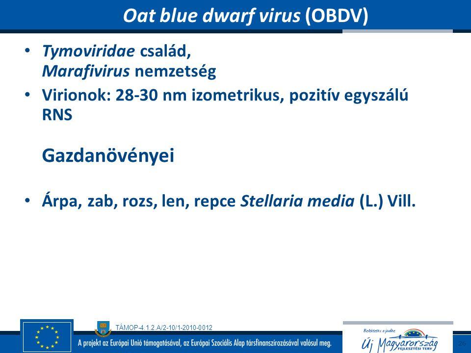 Oat blue dwarf virus (OBDV)