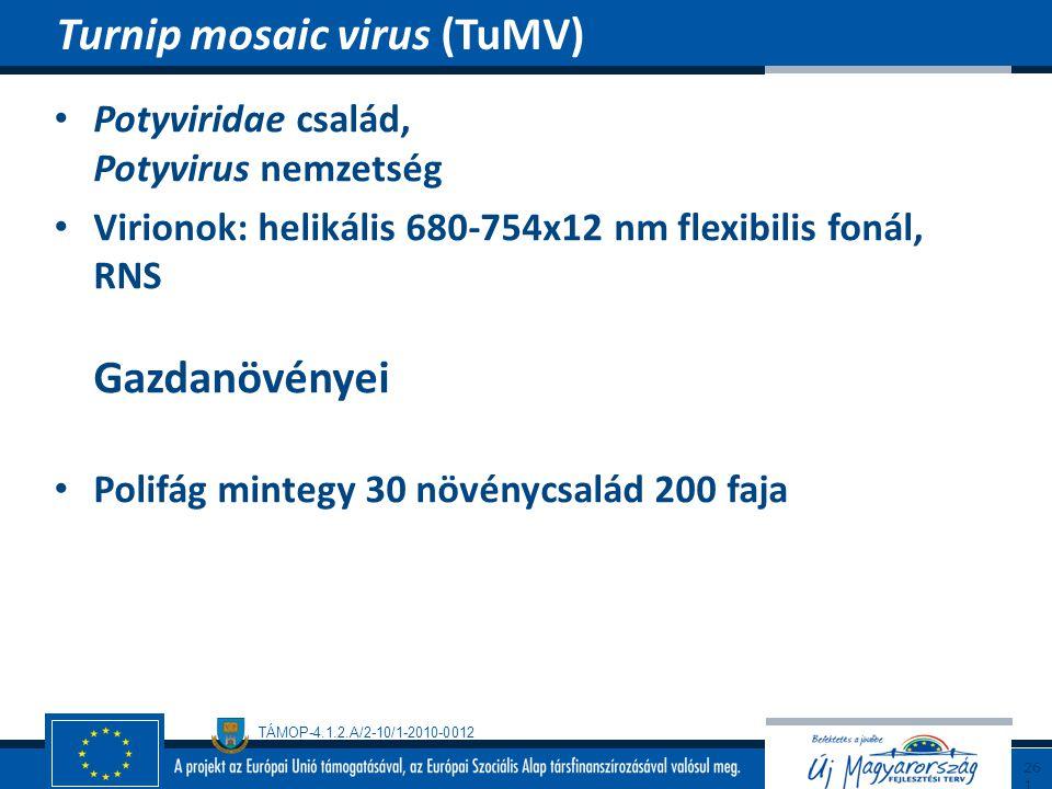Turnip mosaic virus (TuMV)