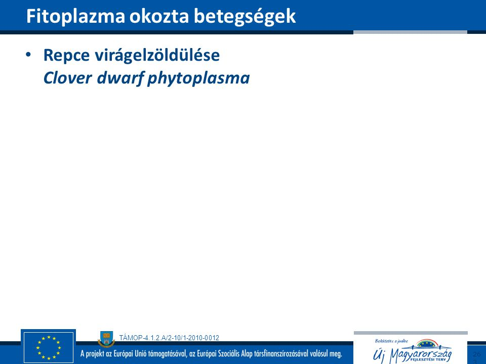 Fitoplazma okozta betegségek