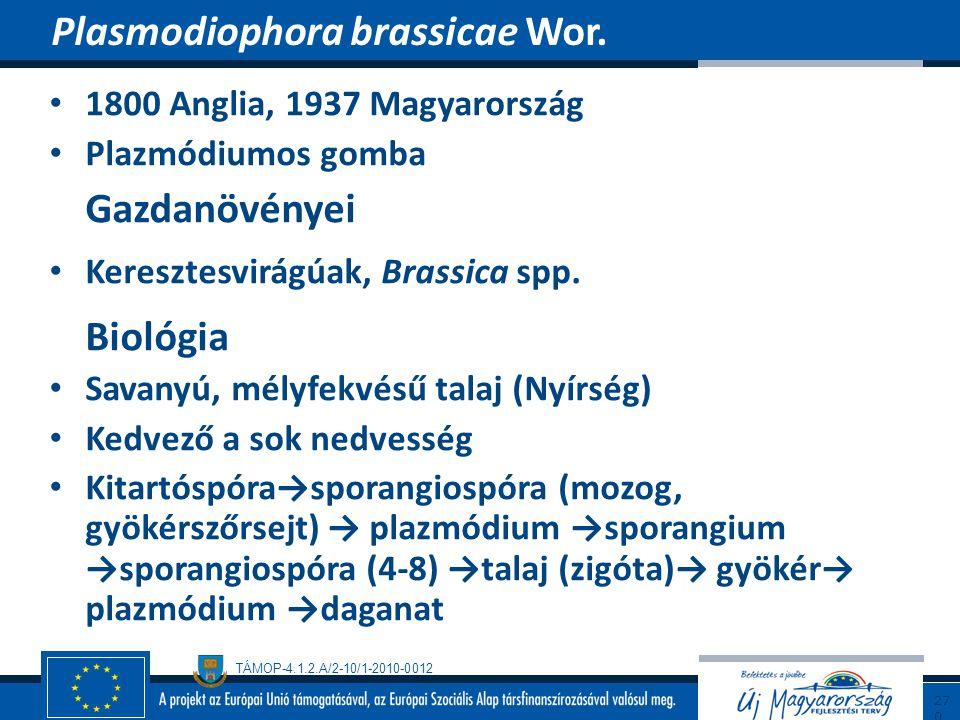 Plasmodiophora brassicae Wor.