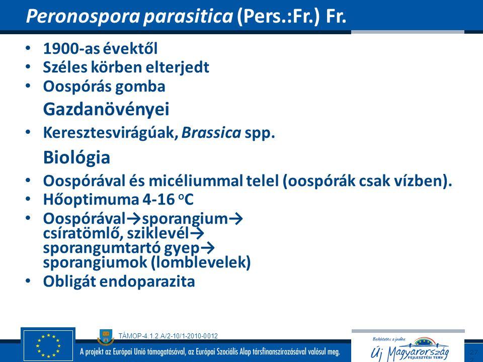 Peronospora parasitica (Pers.:Fr.) Fr.