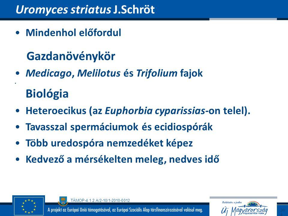 Uromyces striatus J.Schröt