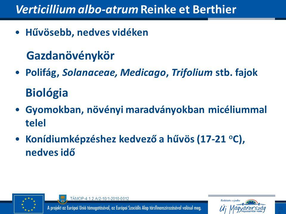 Verticillium albo-atrum Reinke et Berthier