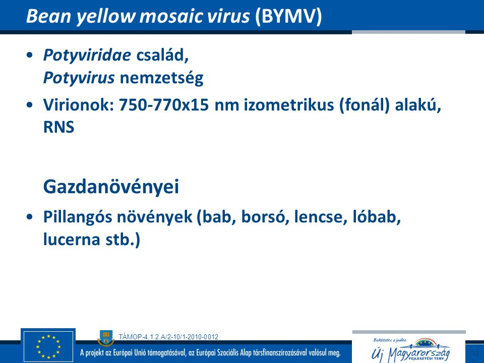 Bean yellow mosaic virus (BYMV)