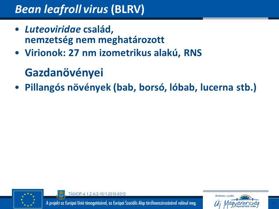 Bean leafroll virus (BLRV)