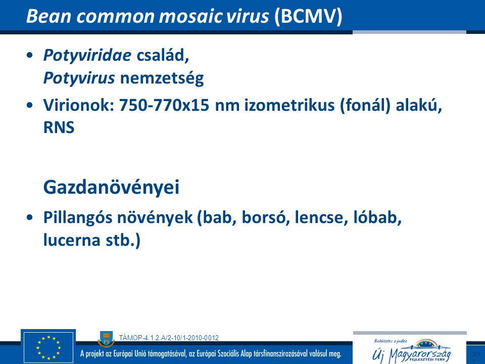 Bean common mosaic virus (BCMV)