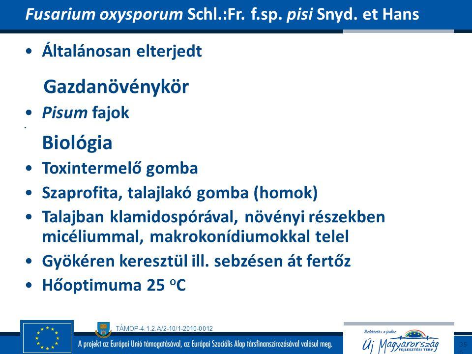 Gazdanövénykör Fusarium oxysporum Schl.:Fr. f.sp. pisi Snyd. et Hans