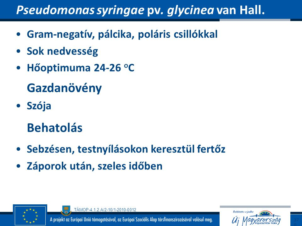 Pseudomonas syringae pv. glycinea van Hall.