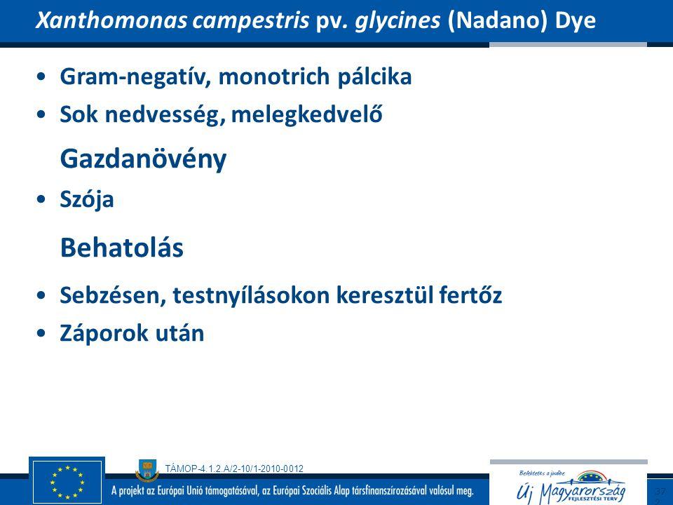 Behatolás Xanthomonas campestris pv. glycines (Nadano) Dye