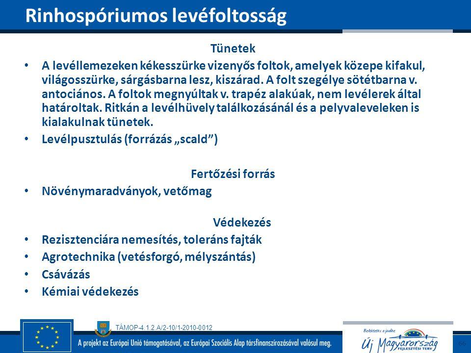 Rinhospóriumos levéfoltosság