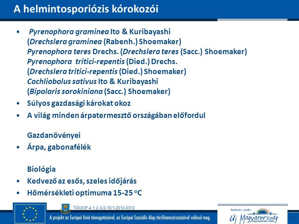 A helmintosporiózis kórokozói