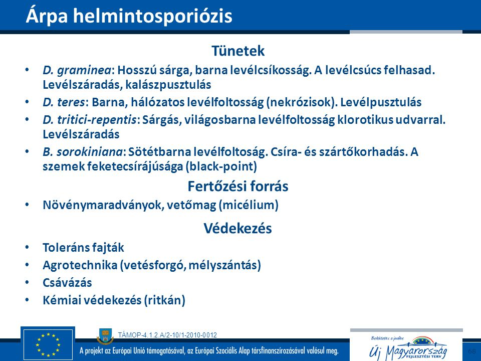 Árpa helmintosporiózis