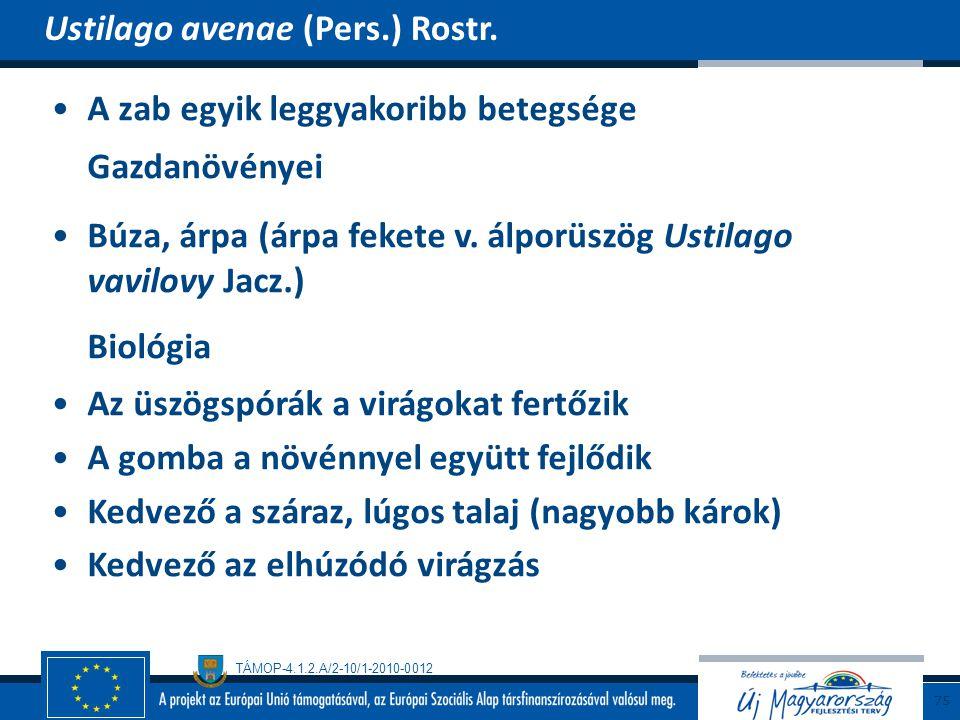 Biológia Ustilago avenae (Pers.) Rostr.