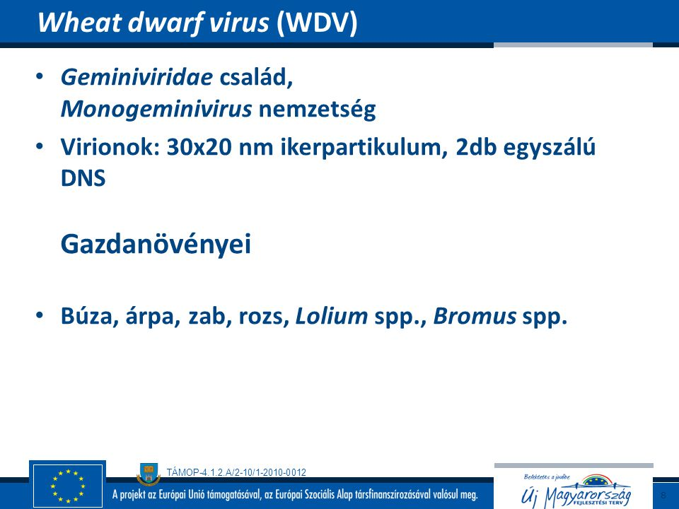 Wheat dwarf virus (WDV)