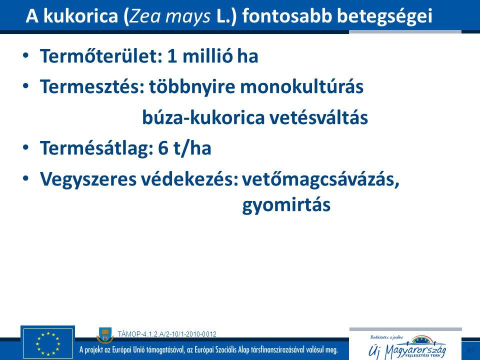 A kukorica (Zea mays L.) fontosabb betegségei