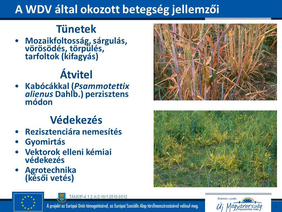 A WDV által okozott betegség jellemzői