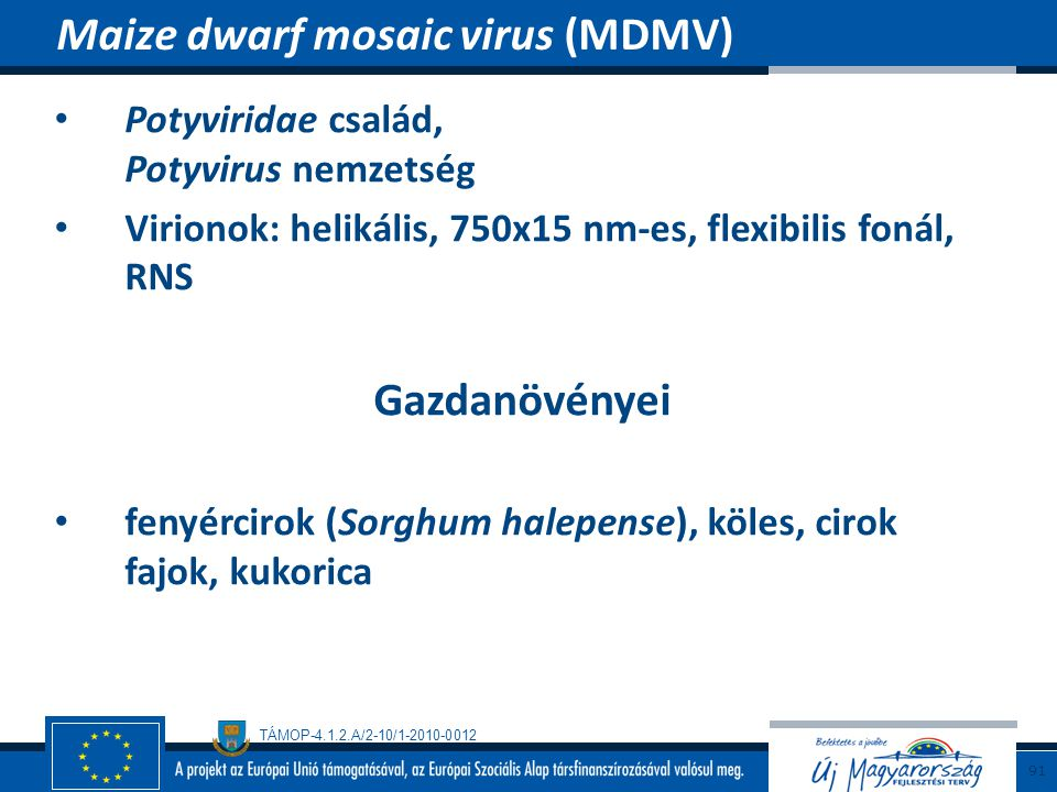 Maize dwarf mosaic virus (MDMV)
