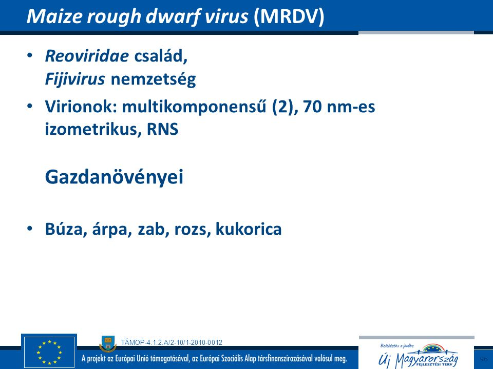 Maize rough dwarf virus (MRDV)