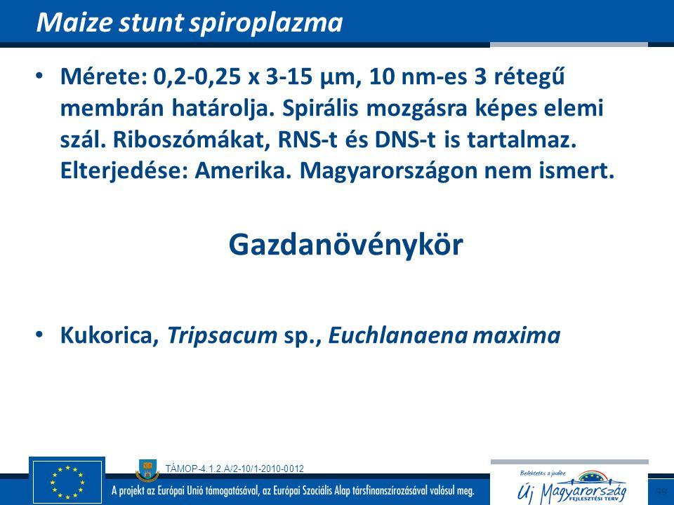 Maize stunt spiroplazma