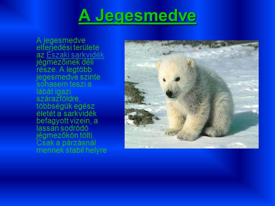 A Jegesmedve