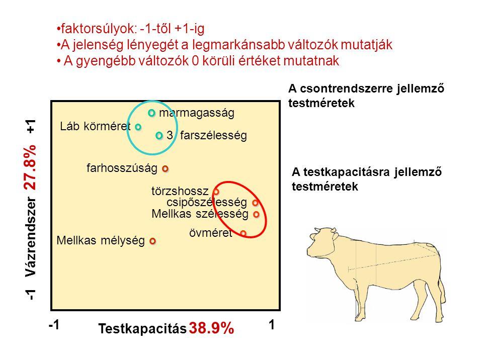 -1 Vázrendszer 27.8% +1 Testkapacitás 38.9%