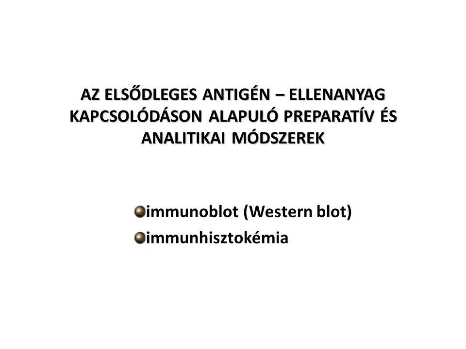 immunoblot (Western blot) immunhisztokémia