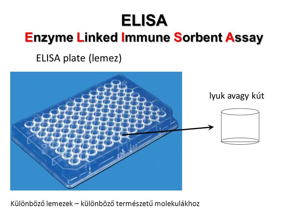 ELISA Enzyme Linked Immune Sorbent Assay
