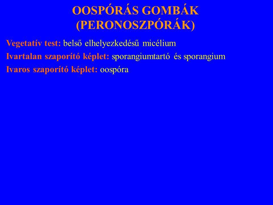 OOSPÓRÁS GOMBÁK (PERONOSZPÓRÁK)