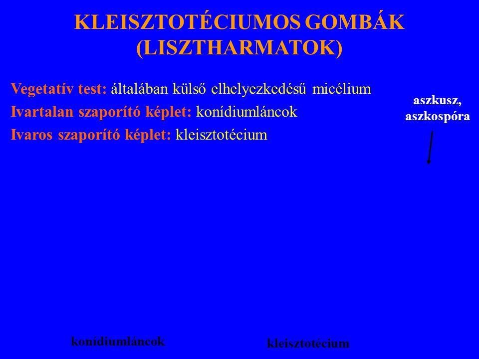 KLEISZTOTÉCIUMOS GOMBÁK (LISZTHARMATOK)