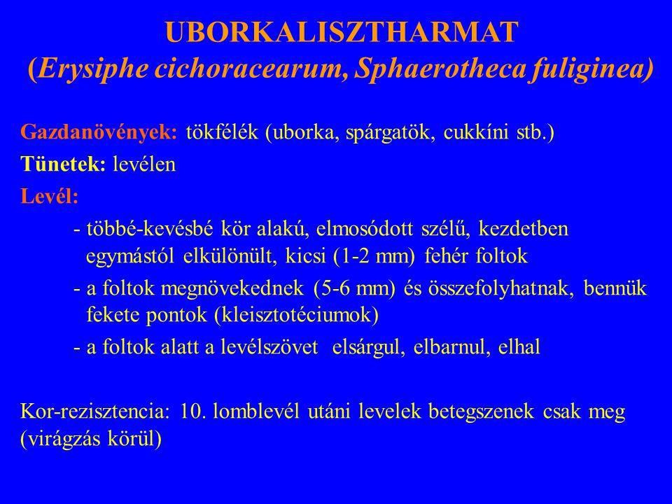 (Erysiphe cichoracearum, Sphaerotheca fuliginea)