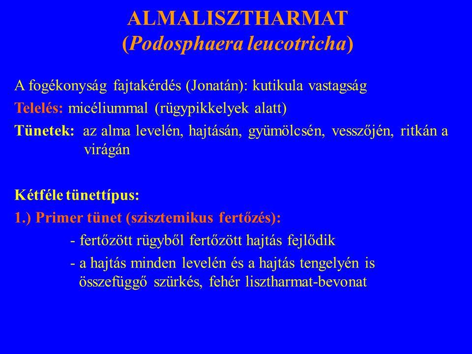 (Podosphaera leucotricha)