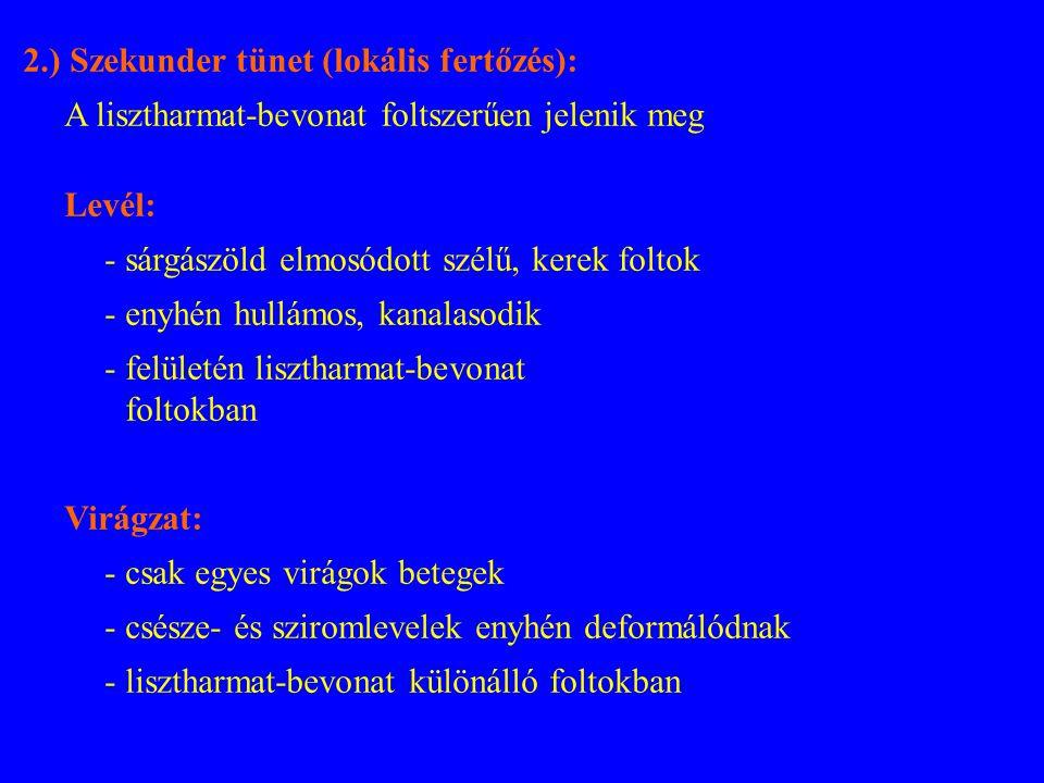 2.) Szekunder tünet (lokális fertőzés):