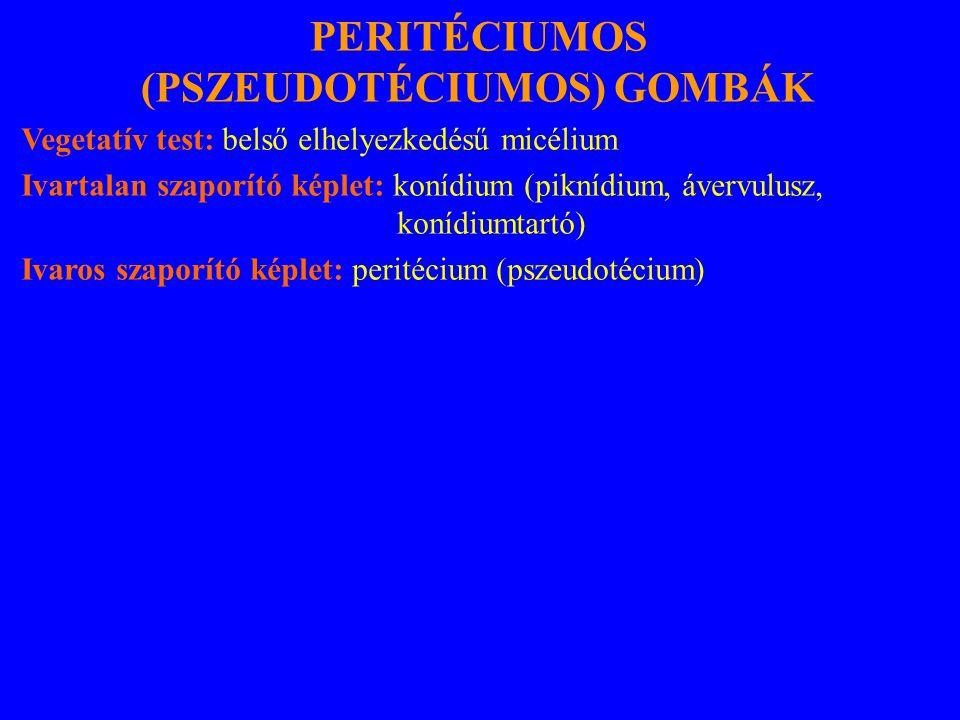 PERITÉCIUMOS (PSZEUDOTÉCIUMOS) GOMBÁK