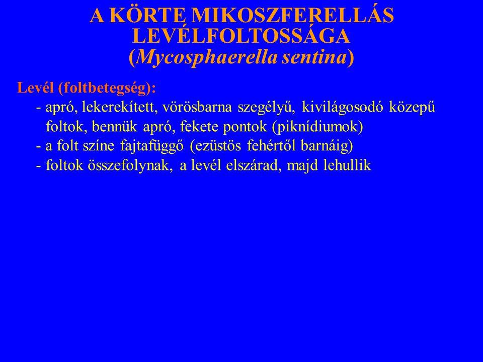 A KÖRTE MIKOSZFERELLÁS LEVÉLFOLTOSSÁGA (Mycosphaerella sentina)