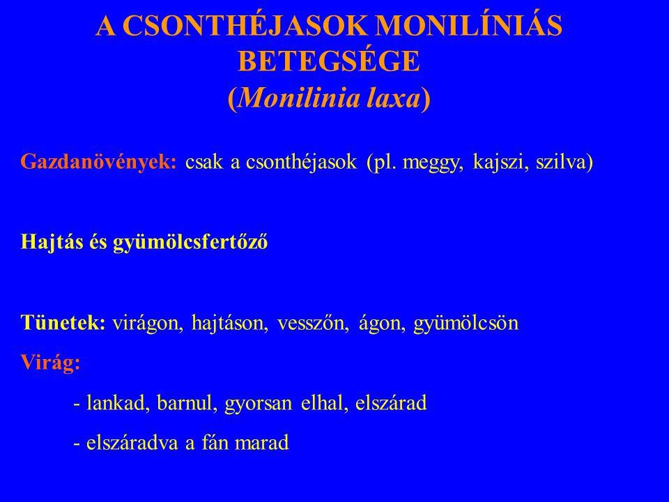 A CSONTHÉJASOK MONILÍNIÁS BETEGSÉGE