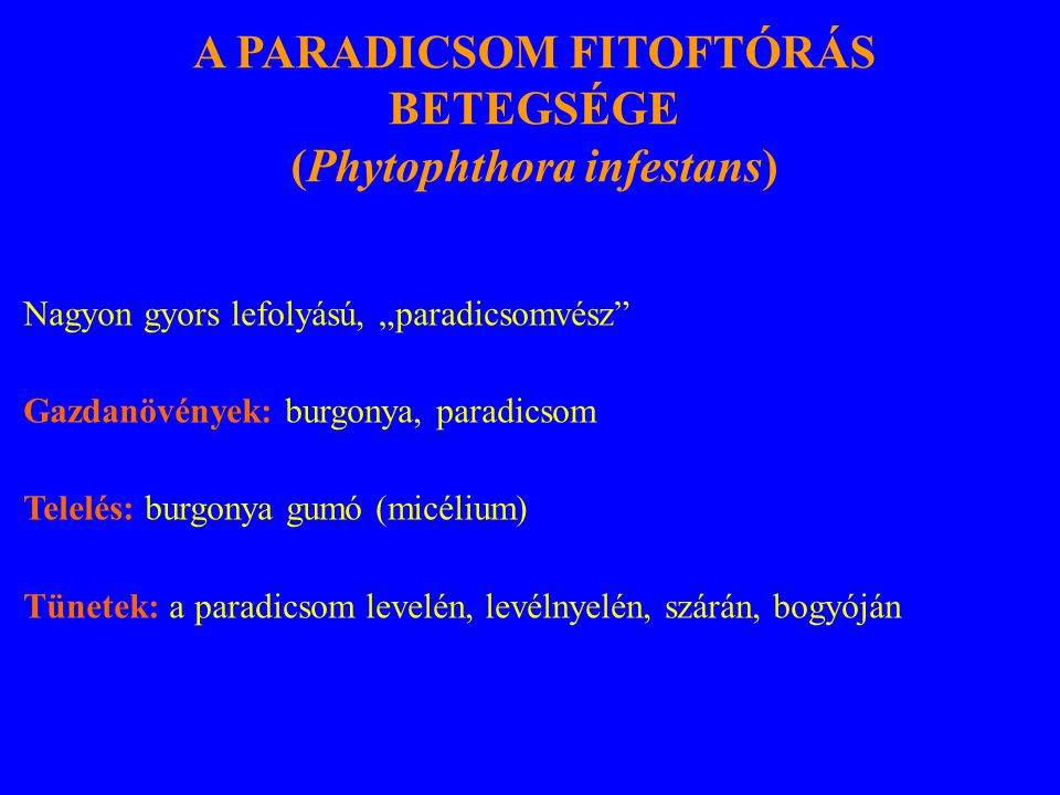 A PARADICSOM FITOFTÓRÁS BETEGSÉGE (Phytophthora infestans)