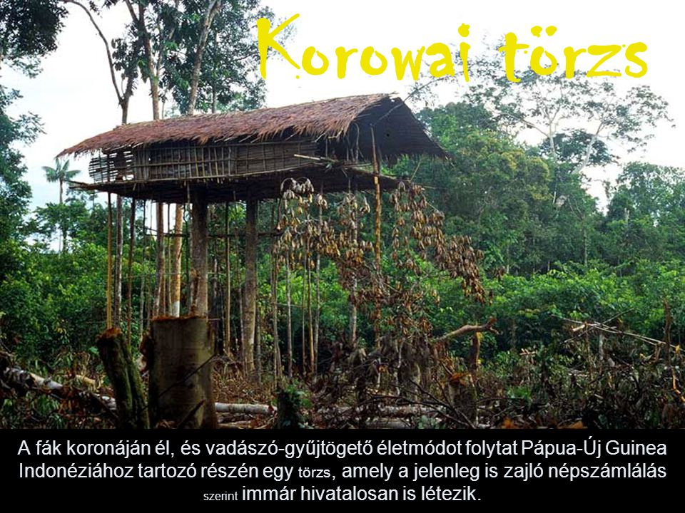 Korowai törzs