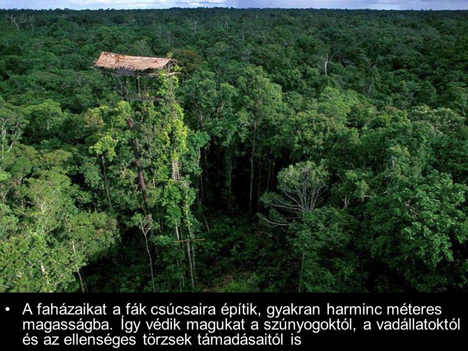 A faházaikat a fák csúcsaira építik, gyakran harminc méteres magasságba.