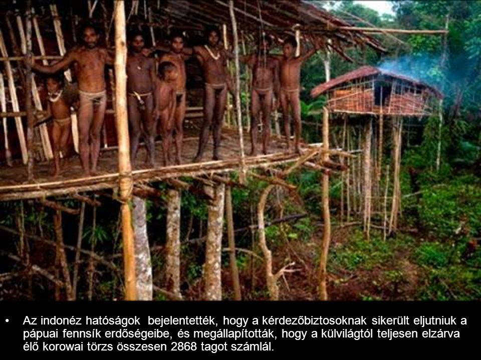 Az indonéz hatóságok bejelentették, hogy a kérdezőbiztosoknak sikerült eljutniuk a pápuai fennsík erdőségeibe, és megállapították, hogy a külvilágtól teljesen elzárva élő korowai törzs összesen 2868 tagot számlál.