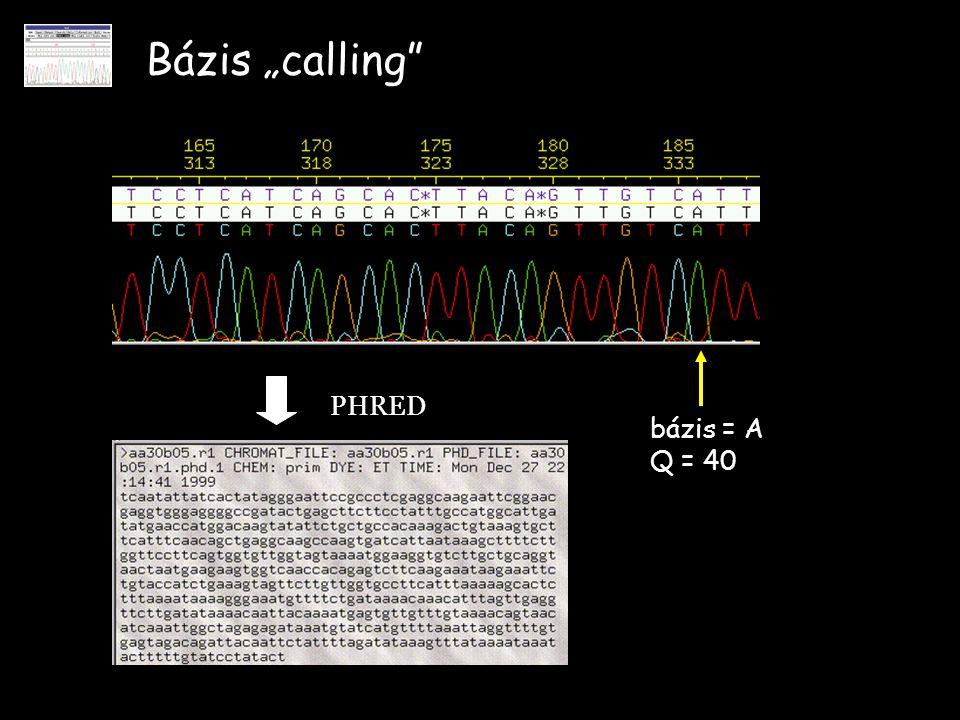 """Bázis """"calling PHRED bázis = A Q = 40"""
