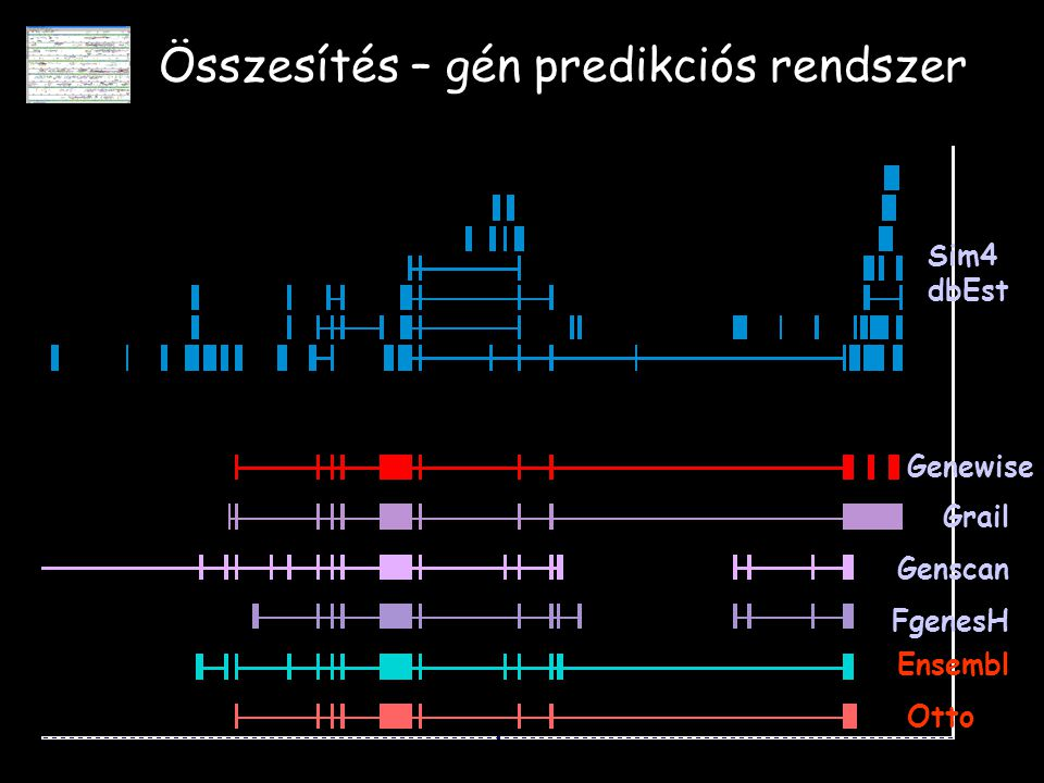 Összesítés – gén predikciós rendszer