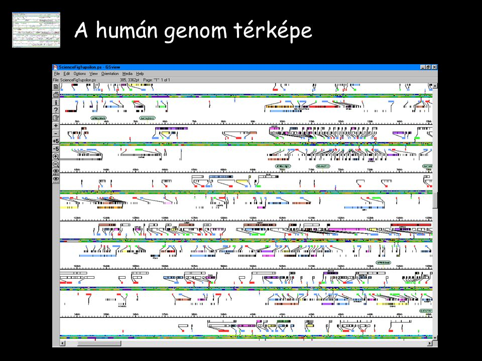 A humán genom térképe