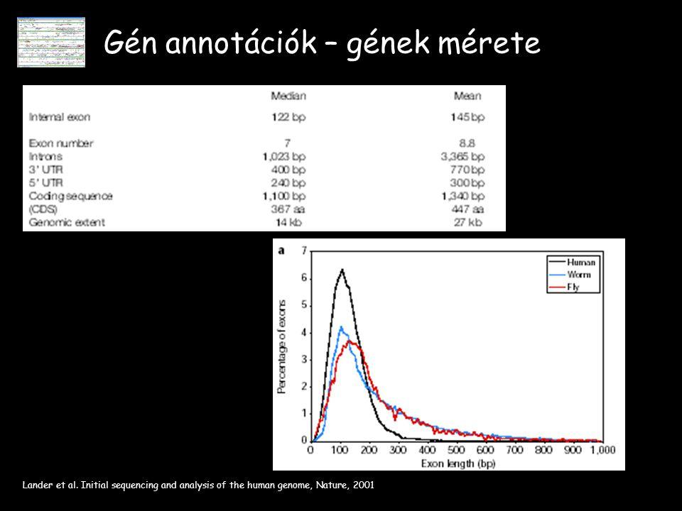 Gén annotációk – gének mérete